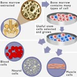 Pros of Stem Cell Research