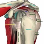 I Am Diagnosed with Glenoid Labrum Tear - What Are My Options?