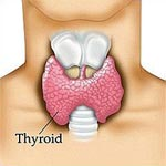 Hyper Thyroid Symptoms