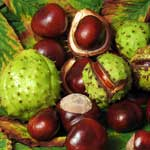 Horse Chestnut Side Effects