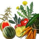 Diuretic Foods List
