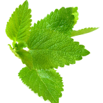 lemon balm side effects